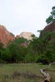Großer weißer Thron, Zion National Park, Utah Lizenzfreies Stockbild
