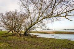 Großer Weidenbaum über den überschwemmten Floodplains Lizenzfreie Stockbilder