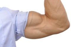Großer zweiköpfiger Muskel Stockbild