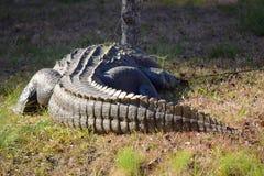 Großes Alligatorendstück Lizenzfreies Stockfoto