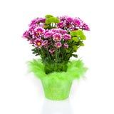 Großes Bündel Chrysanthemen Lizenzfreie Stockfotos
