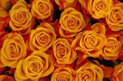 Großes Bündel Rosen Stockfotos