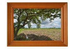 Großes Baum- und Feldbild im Teakholzrahmen Stockfotografie