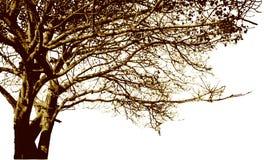 Großes Baum- und Niederlassungsschattenbild Ausführlicher Vektor Stockfotografie