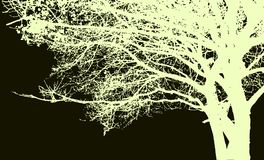 Großes Baum- und Niederlassungsschattenbild Ausführlicher Vektor Lizenzfreies Stockbild
