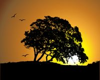 Großes Baumschattenbild auf Sonnenunterganghintergrund Stockfoto