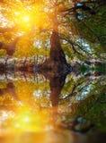 Großes Baumschattenbild und grüner hölzerner Sonnenlichthintergrund der Natur Lizenzfreies Stockbild