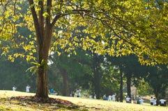 Großes belichtetes Baum-Kabinendach lizenzfreie stockfotos