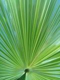 Großes Blatt der wild wachsender Pflanze Lizenzfreies Stockbild