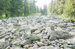 Großes Blockfeld im Naturpark Lizenzfreies Stockbild