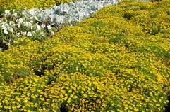 Großes Blumenbett Lizenzfreies Stockbild