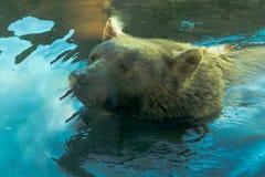 Großes Brown betreffen den Tier Baum -, lebenden Organismus, Säugetiere lizenzfreie stockfotografie