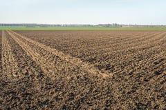 Großes Feld gepflogen in zwei Richtungen stockbild