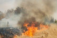 Großes Feuer auf Ackerland nahe Wald Stockfoto
