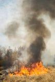 Großes Feuer auf Ackerland nahe Wald Lizenzfreies Stockfoto
