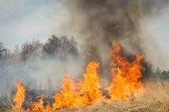 Großes Feuer auf Ackerland nahe Wald Lizenzfreies Stockbild