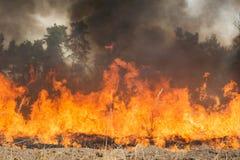 Großes Feuer auf Ackerland nahe Wald Stockfotos