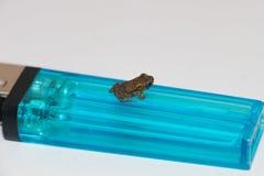 Großes Feuerzeug oder kleiner Frosch stockfoto