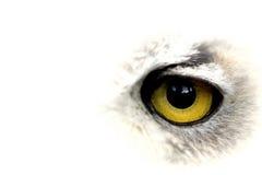 Großes gelbes Auge der Eule Stockbild
