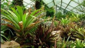 Großes Glashaus in den botanischen Gärten stockfotografie