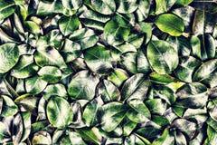 Großes grünes Blätter Floss im Wasser Lizenzfreies Stockbild
