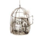 Großes Grey Owl Sleeping In ein Birdcage Stockbilder