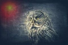 Großes Grey Owl - zusammengesetzte Kunst stockfotos