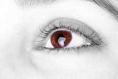 Großes großes braunes Auge Stockbilder