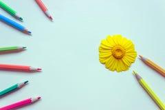 Großes helles Gänseblümchen umgeben durch farbige Bleistifte Konzept-educat Stockfoto
