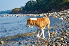 Großes Hundeschwimmen im Meer Lizenzfreies Stockfoto