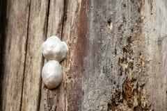 Großes Insektennest auf einem Baum Stockfotos