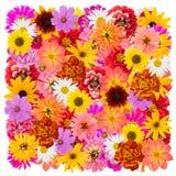 Großes lokalisiertes Blumenquadrat Stockfotos