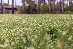Großes Luzernefeld mit Palme in Ägypten Lizenzfreies Stockfoto