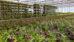 Gro?es modernes Gew?chshaus mit Blumen in Folge stock footage