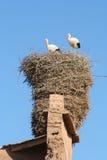 Großes Nest Lizenzfreies Stockfoto
