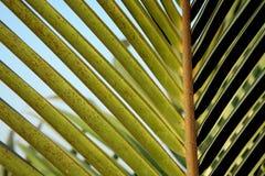 Großes Palmblatt auf Himmellumen Stockbilder