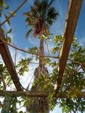 Großes Palmen-T-Stück stockfoto