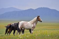 Großes Pferd stockfotografie