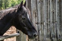 Großes Pferd außerhalb der Scheune Stockfoto