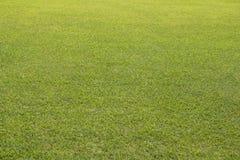 Großes Rasenyard des grünen Grases stockfotos