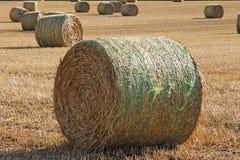 Großes rundes Straw Bales auf einem Gebiet Lizenzfreie Stockfotos