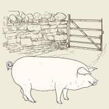 Großes Schwein am Tor Lizenzfreies Stockbild