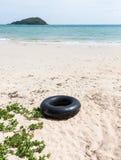 Großes Schwimmenrohr nahe dem einsamen Strand stockfotos