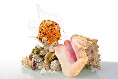 Großes Seeshell mit Glasfischen und Korallen Stockbilder