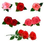 Großes Set von schöne farbige Rosen. Lizenzfreies Stockbild