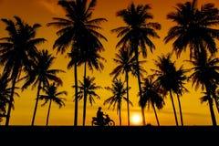 Großes Sonnenuntergang- und Baumschattenbild Lizenzfreie Stockbilder