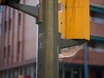 Großes Spinnennetz auf einer Ampel mitten in einem Stadtgebiet stockfotos