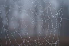 Großes Spinnennetz in den Regentropfen Lizenzfreie Stockbilder