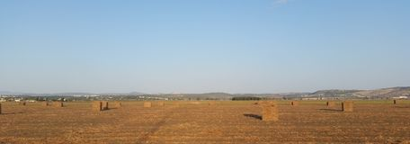 Großes Straw Cubes Lying In The-Feld nach der Ernte, die lang schafft Stockfoto