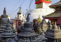 Großes Stupa im Swayambhunath-Tempel Stockfotos